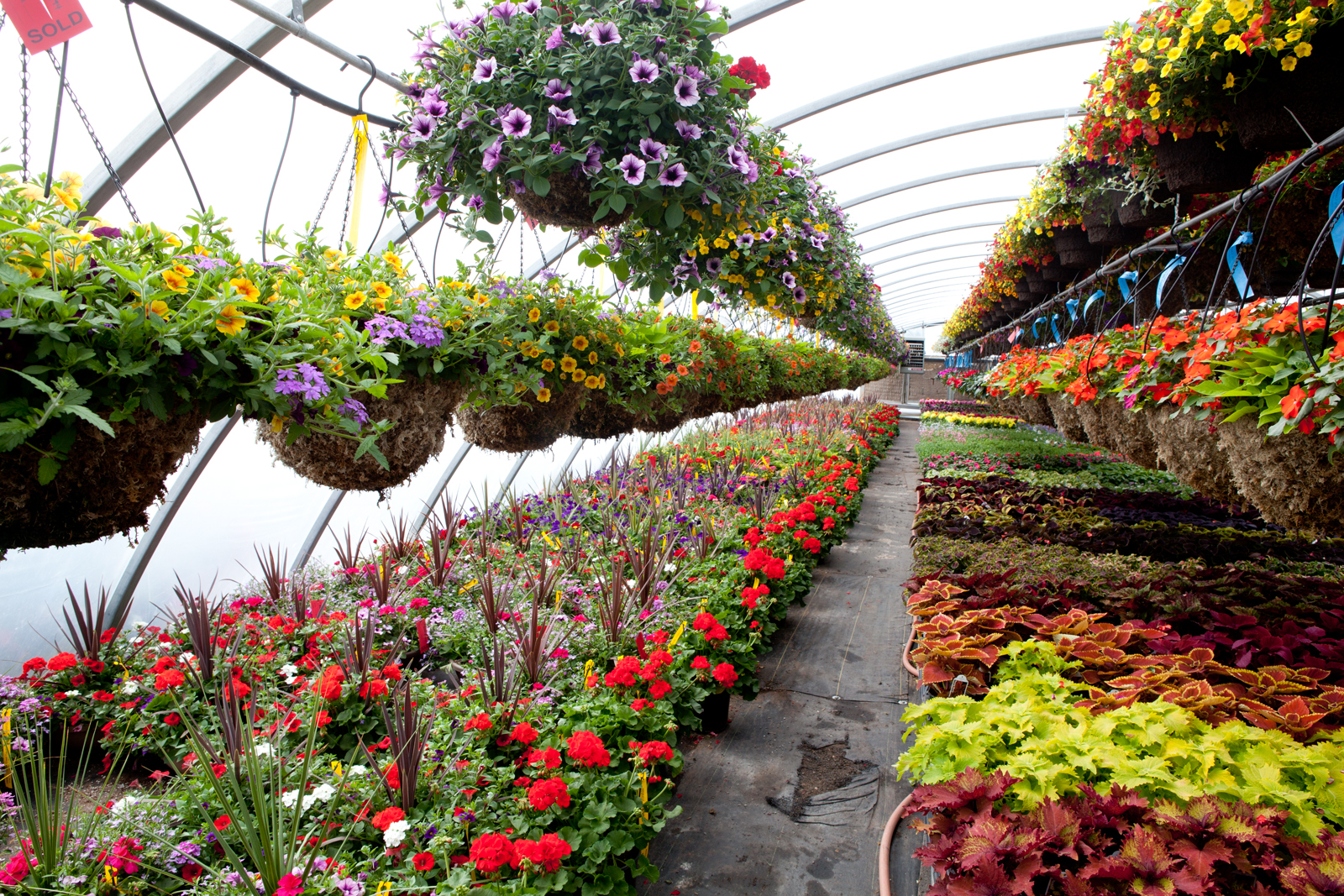 Plants And Flowers Plant Nursery Flower Nursery